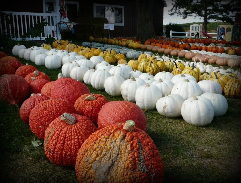 Pumpkin Patch Festival 171 Bridgeport Resort